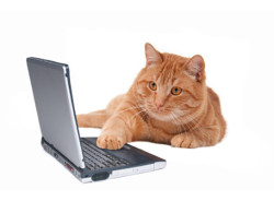 CatWorkingAtComputer