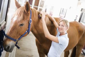 Large Animal Medicine & Surgery