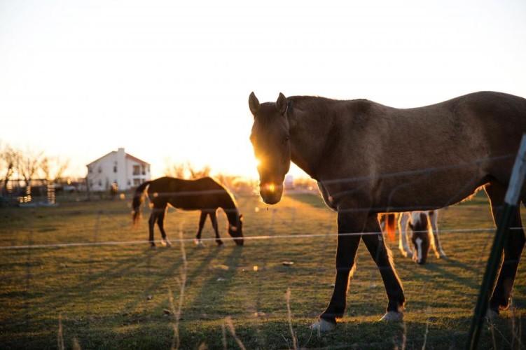 michael bay horses